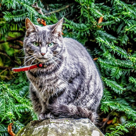 O'h What A Lovely Poser by Ian Popple - Animals - Cats Portraits ( animal )