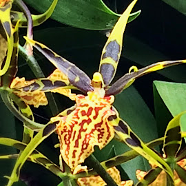 Orchid by Janette Ho - Instagram & Mobile iPhone