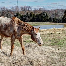The Pasture by Joe Machuta - Animals Horses