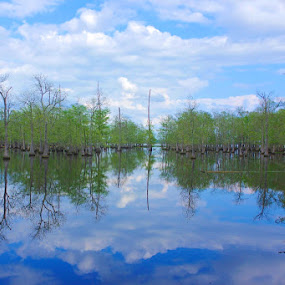 Reflections upon a Cloudy Day by Kirk Barnes - Landscapes Waterscapes ( reflection, clouds, lake, trees, water )