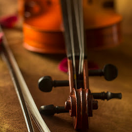 The Bow & Scroll by Rakesh Syal - Artistic Objects Musical Instruments