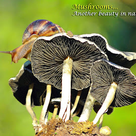 Mushrooms by Asif Bora - Typography Quotes & Sentences