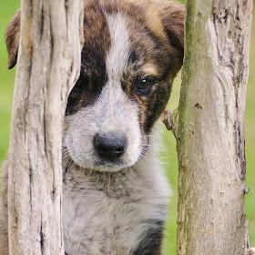 Wildlife Flowers Dogs November 162.JPG