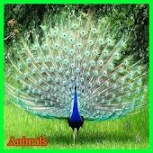 Free Animals APK for Windows 8