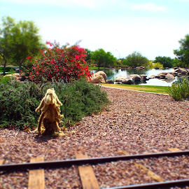 Tracks by Toni Krekelberg - City,  Street & Park  City Parks ( train tracks, park, parks, lakes, lake )