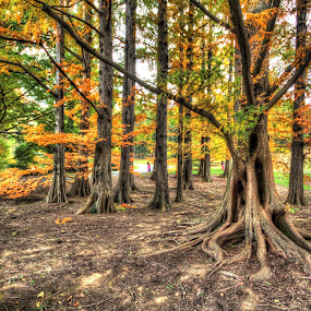 Fall Cedar Grove by Donna Neal - City,  Street & Park  City Parks ( fall, color, colorful, nature )