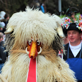 by Anny  An - People Musicians & Entertainers ( costumed, slovenia, ptuj carnival )