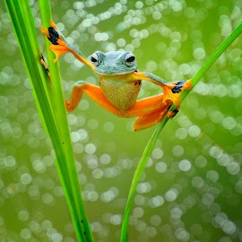 show time by Candra Irawan - Animals Amphibians