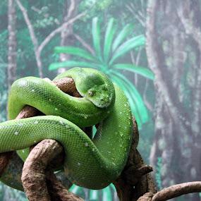 Fauq dat sheet..... by Ty Hanson - Animals Reptiles