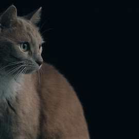 Morning by Niklas Hampinen - Animals - Cats Portraits ( cats, cat, indoor, gorgeous, awesome, pet, pets, beautiful, dark, cute, morning, soft )