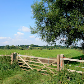 Beccles Marshes by Emma Thompson - Landscapes Prairies, Meadows & Fields ( field, green blue, gate,  )
