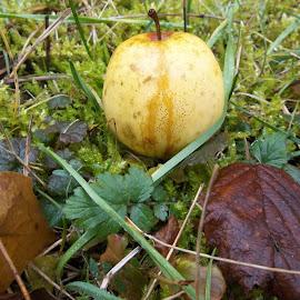 Ябълка by Georgi Kolev - Food & Drink Fruits & Vegetables ( треви., мъх., ябълка., ден., листа., време. )
