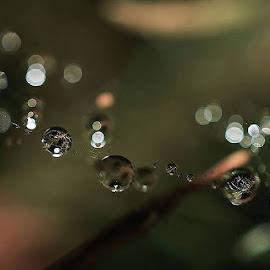 drops by Jana Černošková - Nature Up Close Water ( drops,  )