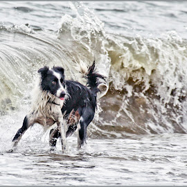 Behind You! by Deleted Deleted - Animals - Dogs Playing