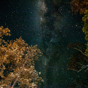 Milky way by Mark Luyt - Landscapes Starscapes ( forest, milky way, nightscape, stars, trees,  )