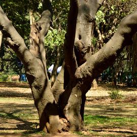 Cubbon Park - Tree. by Vinod Rajan - City,  Street & Park  City Parks ( greenery, nature, tree, trees, park,  )
