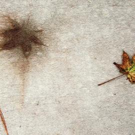 Fallen Leaf by Edward Gold - Digital Art Things ( digital photography, outlined leaf, colored leaf, textured, fallen leaf, cement background, digital art,  )