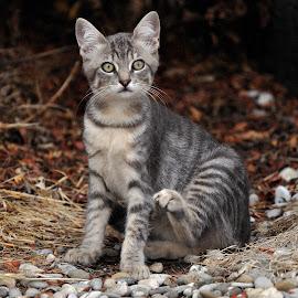 by Lorraine Bettex - Animals - Cats Kittens (  )