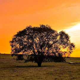 Serenity  by Jim Dawson - Novices Only Landscapes ( farm, tree, sunset, landscape )