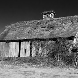 I'm still standing!  by Carol Mickey - Novices Only Landscapes ( pa. barns, barns, old barns )