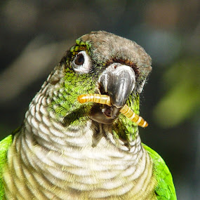 Greenie, The Friendly Parrot by Mw C - Animals Birds