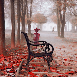 the last days of autumn by Sanja Dedić - City,  Street & Park  City Parks ( park scene, park, autumn, park bench )