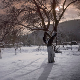 Winter garden by Rombe Kasňa - Nature Up Close Gardens & Produce ( winter, sky, snow, trees, garden, sun,  )