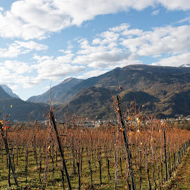 Fläsh, Graubünden, Switzerland by Serguei Ouklonski - Landscapes Mountains & Hills ( vineyard, mountain, vine, no person, valley, travel, scenic, beauty in nature, graubunden, landscape, nature landscape, food drinks, sky, nature, cloud - sky, autumn, mountain range, fog, no people, outdoors, fall, switzerland, day )