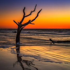 Hunting Island sunrise by Izzy Kapetanovic - Landscapes Sunsets & Sunrises ( beaufort, orange, reflection, hunting island state park, tree, blue, colors, sunrise, south carolina, hunting island beach )