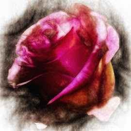 Digital Rose Painting by Dave Walters - Abstract Macro ( nature, digital painting, rose, abstract, colors, digital art )