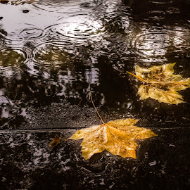 by Nadya Staneva - Nature Up Close Leaves & Grasses ( water, drops, puddle, leaves, rain )