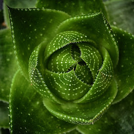 Green by Marco Bertamé - Nature Up Close Other plants ( plant, green )