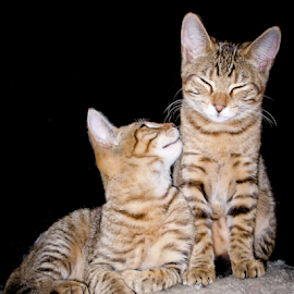 Twins by Myra Brizendine Wilson - Animals - Cats Kittens ( green cat eyes, kitten, cat, cat brothers, cat twins, twin cats, twins, cats, cat siblings, cat eyes, pet, brotherly love, pets, double cats, green eyes, kittens, feline, twin cat, two cats,  )