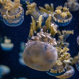 by Kamal Shokarti - Animals Sea Creatures