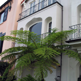 San Francisco Living by Christine B. - Buildings & Architecture Other Exteriors ( home, tree, white, pink, san francisco )