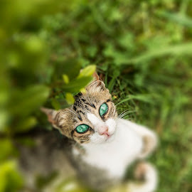 Everything in the eyes by Moises Paquete - Animals - Cats Portraits ( cat, green, eyes )