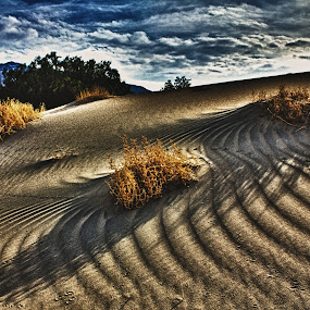 Tracks of Time by Preston Trauscht - Landscapes Deserts ( animal tracks, sand, dunes, mountain, bushes, sand dunes, sunset, interesting, gold, tracks, landscape )