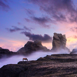 lonely horse by Budi Cc-line - Digital Art Places ( klayar, budi ccline, indonesia, horse )