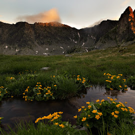 yellow flowers at sunset by Ciprian Miresan - Landscapes Mountains & Hills