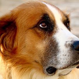 by Lu  Yo - Animals - Dogs Portraits