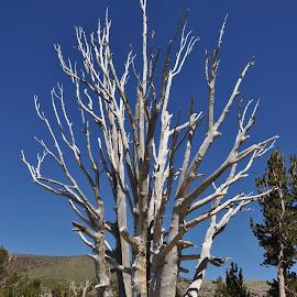 White Snag by Steven Calhoun - Nature Up Close Trees & Bushes