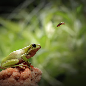 Smile for u by Andi Adinata - Animals Amphibians ( animals )