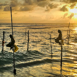 Stilt fishermen by Zeljko Kliska - Uncategorized All Uncategorized ( fishermen, sunset, travel, sri lanka, people )