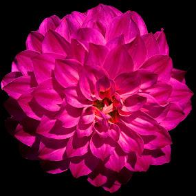 by Mc Melwyn Vergado - Nature Up Close Flowers - 2011-2013
