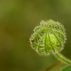 Bud by Yamini Yashi - Nature Up Close Other plants ( #nature, #budding, #abstract, #macro, #flower )