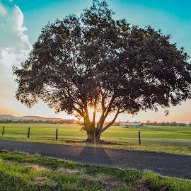 Lone Tree at Sundown by Rob Crutcher  - Landscapes Prairies, Meadows & Fields ( tree, sunset, meadows, landscape, fields )