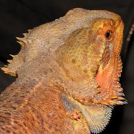 Jen hlava by Věra Tudy - Animals Reptiles