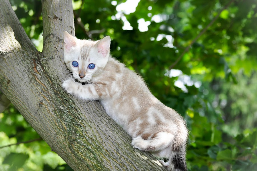 by Rob Ebersole - Animals - Cats Kittens ( jeff & alice )