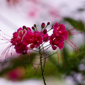 tree blossom by Santosh Vanahalli - Flowers Tree Blossoms ( tree blossom )