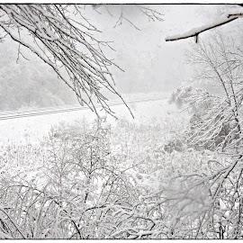 Winter Storm Barbara 2016 by Susan Thomas - Nature Up Close Trees & Bushes